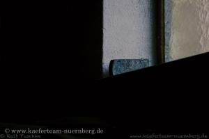 Eisenhammer_-_05-7