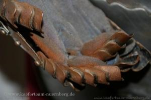 Eisenhammer_-_32-34